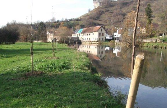 Vallée de la Loue : travaux de restauration des boisements de berge (tranche 2018-2019)