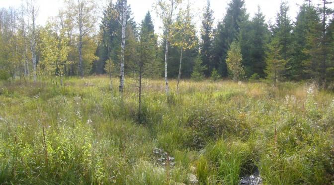 Présentation des marais et tourbières d'Arc-sous-Cicon à l'occasion de la journée mondiale des zones humides