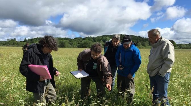 VIDEO : 6 exploitations agricoles en lice pour le concours des prairies fleuries